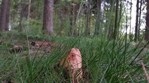Feldstein im Wald
